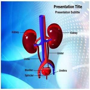 Urology PowerPoint Templates   Background On Urology (PPT