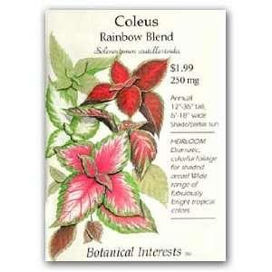 Coleus Rainbow Blend Seeds Patio, Lawn & Garden