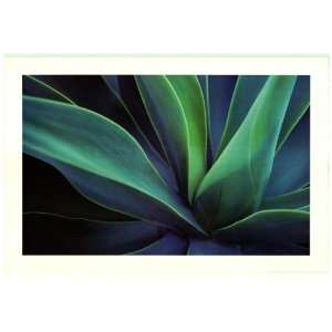 Cactus Flower Plant   Photography Poster   24 x 36