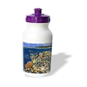 coral reef environment, Marshall Islands, Micronesia   Water Bottles