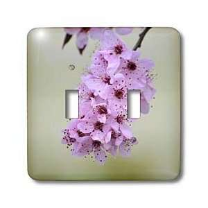Sweet Spring  Cherry Blossom Flowers  Floral Photography   Light