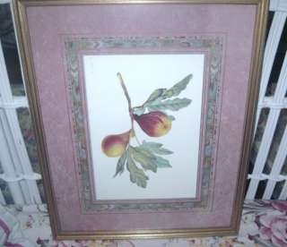 Vintage GOLD Wood Framed w Glass PEARS BOTANICAL Print